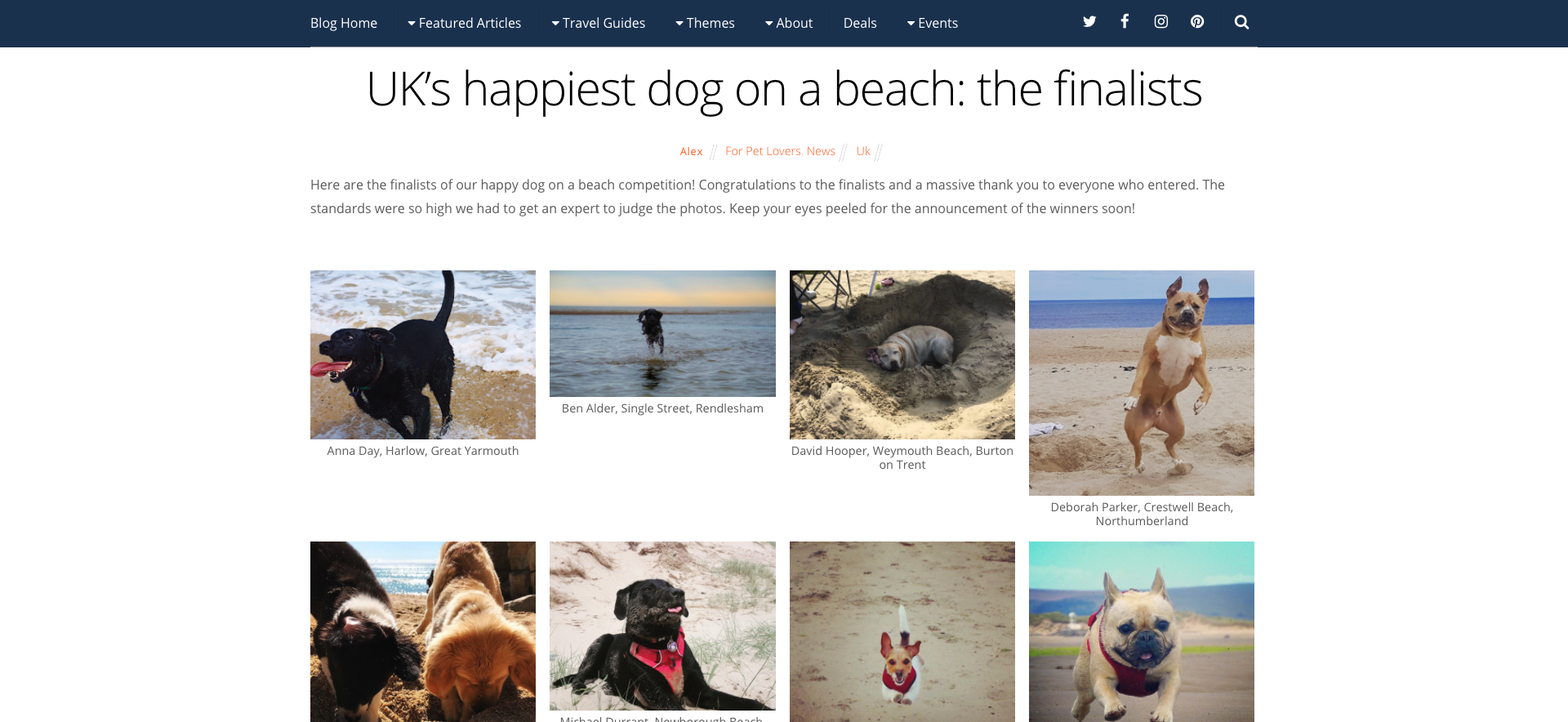UK's happiest dog on a beach the finalists Snaptrip